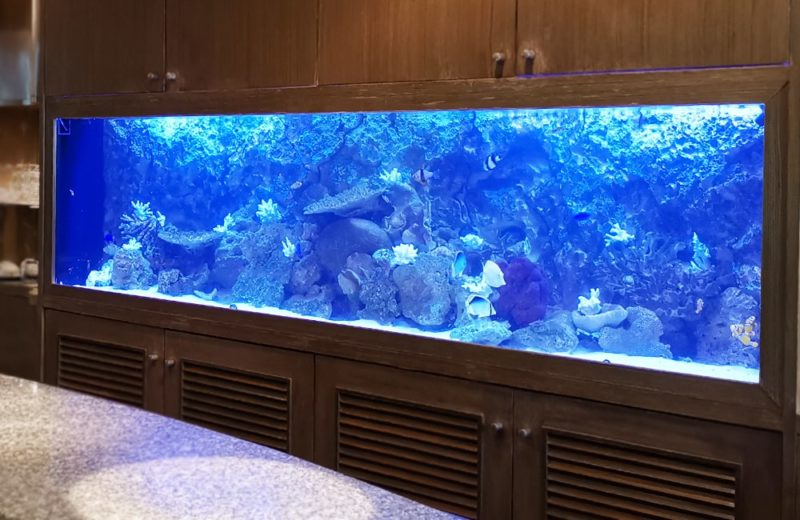 店舗様 埋め込み式 240cm海水魚水槽 メンテナンス事例 水槽画像4