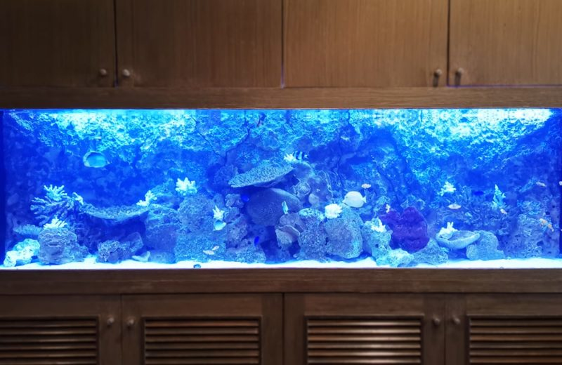 店舗様 埋め込み式 240cm海水魚水槽 メンテナンス事例 水槽画像5