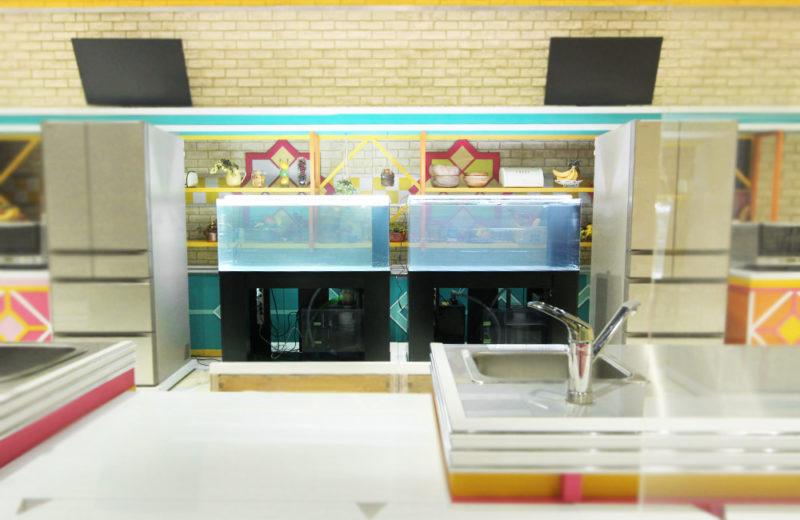 TBS『櫻井・有吉THE夜会』 活魚水槽2台 短期レンタル事例 水槽画像2
