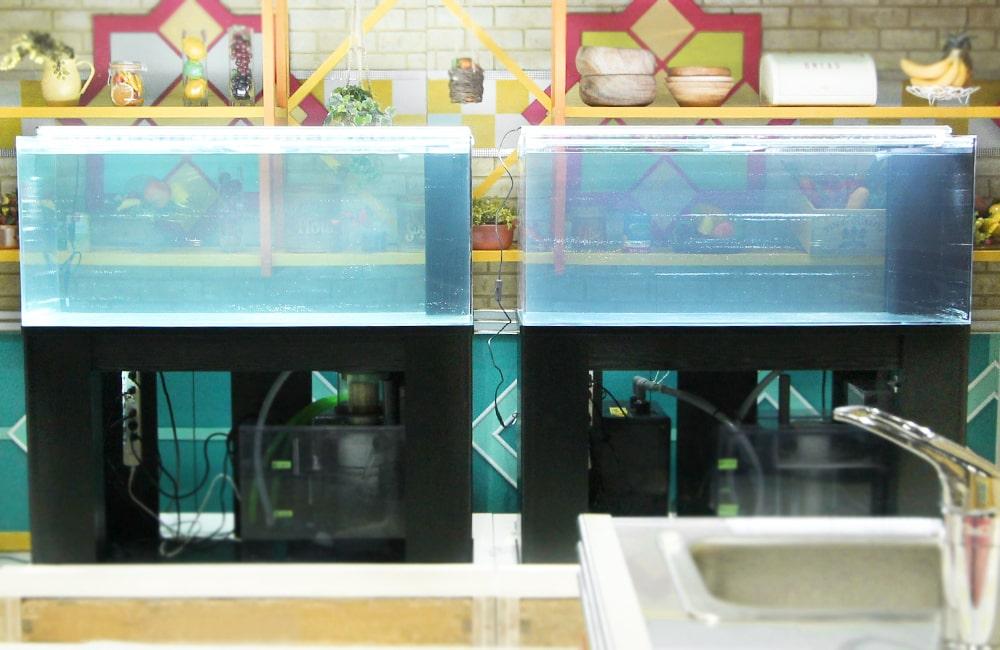 桜井・有吉THE夜会 料理対決 水槽