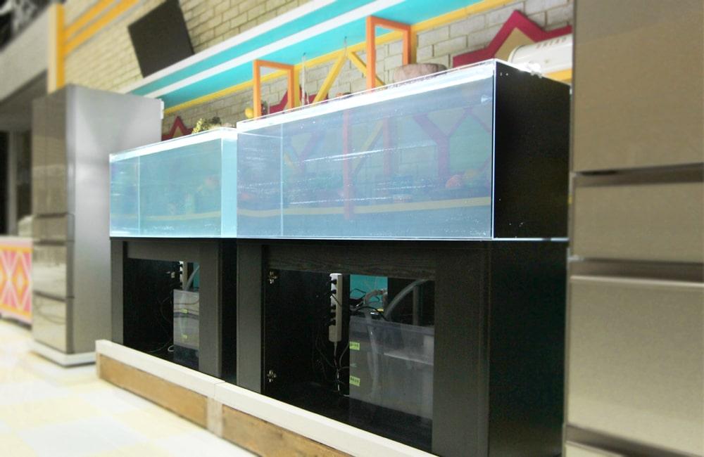 TBS『櫻井・有吉THE夜会』 活魚水槽2台 短期レンタル事例 メイン画像