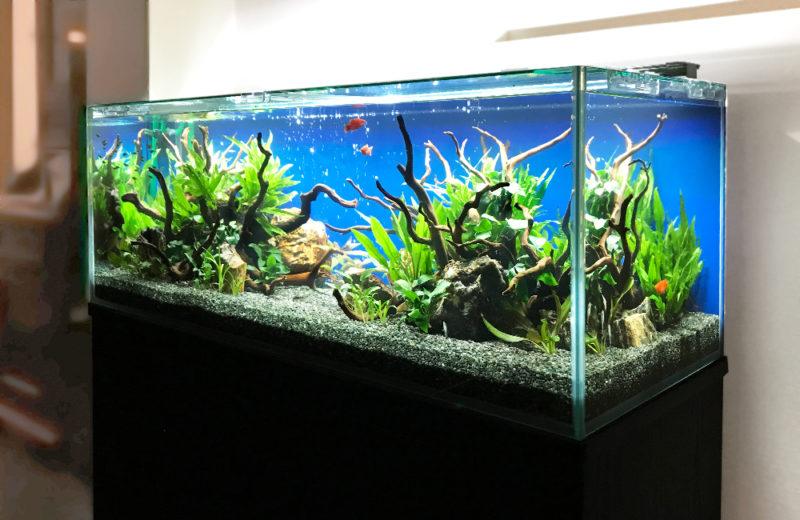 飲食店(Bar) 120cm淡水魚水槽 レンタル事例 水槽画像1