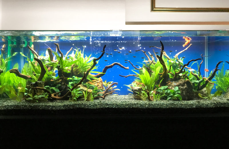 飲食店(Bar) 120cm淡水魚水槽 レンタル事例 水槽画像3