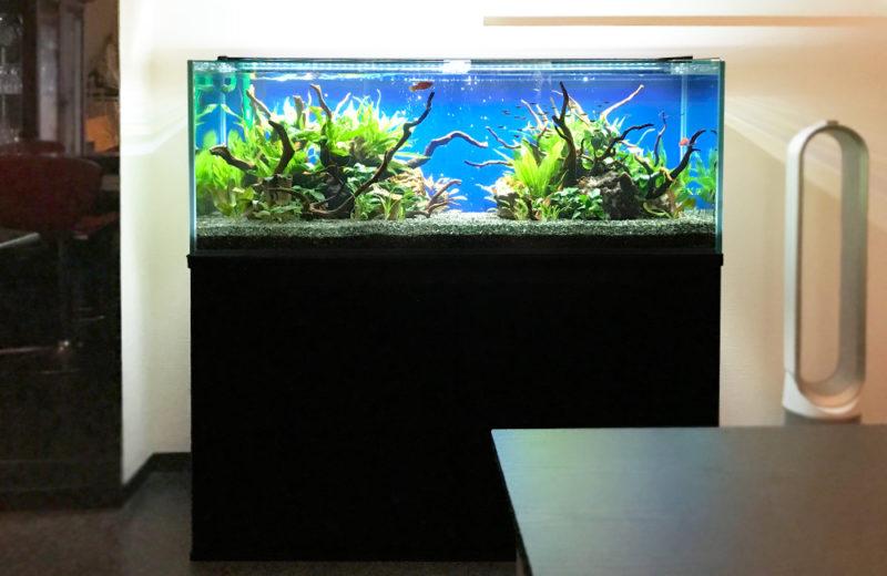 飲食店(Bar) 120cm淡水魚水槽 レンタル事例 水槽画像2