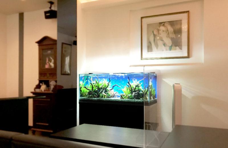 飲食店(Bar) 120cm淡水魚水槽 レンタル事例 水槽画像5