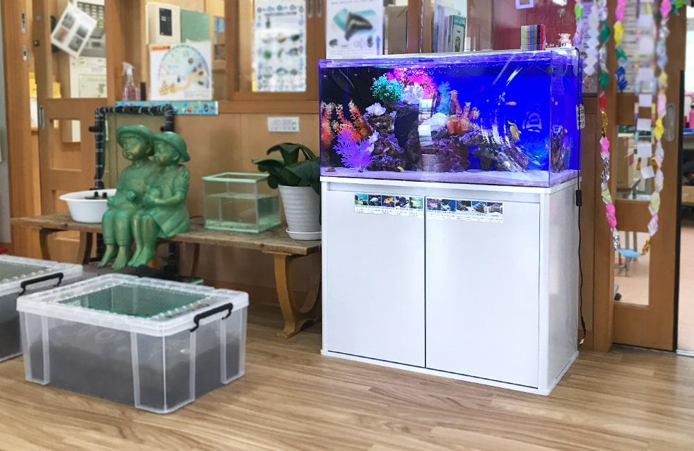 幼児教育施設 90cm海水魚水槽 レンタル事例 メイン画像