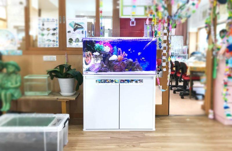 幼児教育施設 90cm海水魚水槽 レンタル事例 水槽画像2
