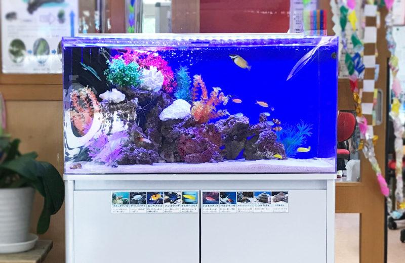 幼児教育施設 90cm海水魚水槽 レンタル事例 水槽画像3