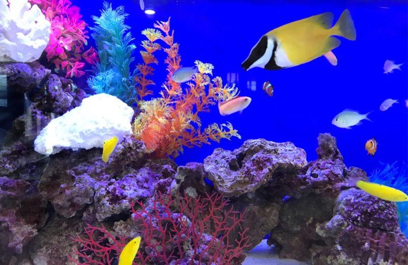幼児教育施設 90cm海水魚水槽 レンタル事例 水槽画像5