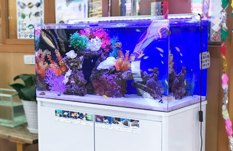 幼児教育施設 90cm海水魚水槽 レンタル事例 水槽画像4