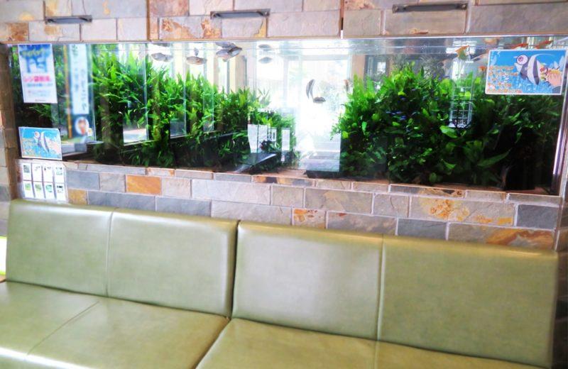 薬局 壁埋め込み 260cm淡水魚水槽 リース事例 その後 水槽画像5