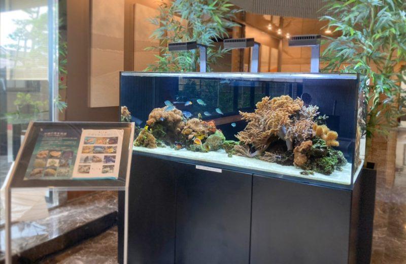 神奈川県藤沢市 オフィス 150cm海水魚水槽 販売・メンテナンス事例 その後 水槽画像1