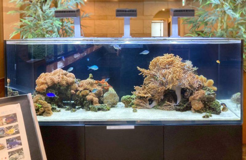 神奈川県藤沢市 オフィス 150cm海水魚水槽 販売・メンテナンス事例 その後 水槽画像2