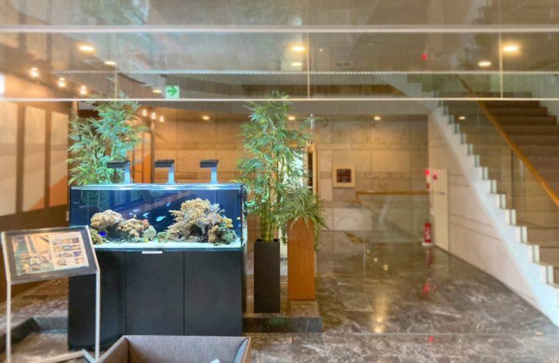 神奈川県藤沢市 オフィス 150cm海水魚水槽 販売・メンテナンス事例 その後 水槽画像5