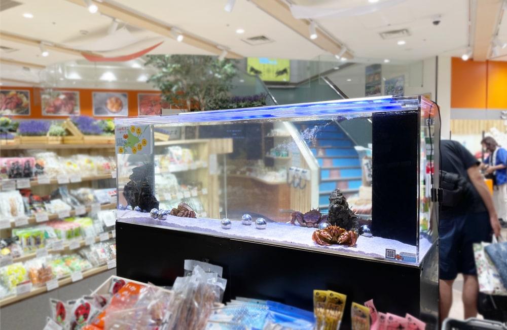 羽田空港内の店舗 150cm活魚水槽 短期レンタル事例 メイン画像