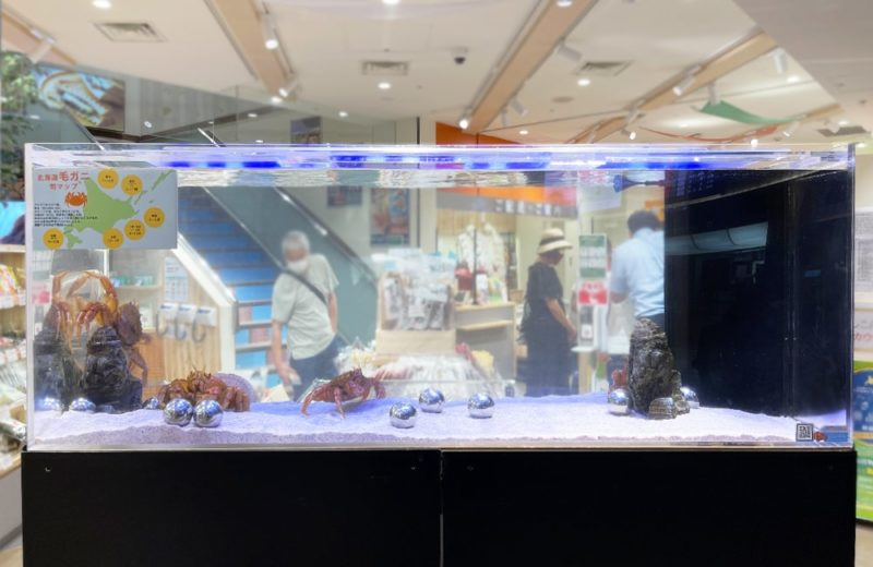 羽田空港内の店舗 150cm活魚水槽 短期レンタル事例 水槽画像2