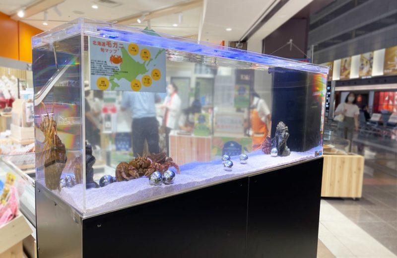 羽田空港内の店舗 150cm活魚水槽 短期レンタル事例 水槽画像5