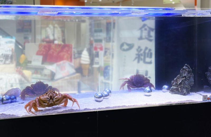 羽田空港内の店舗 150cm活魚水槽 短期レンタル事例 水槽画像3