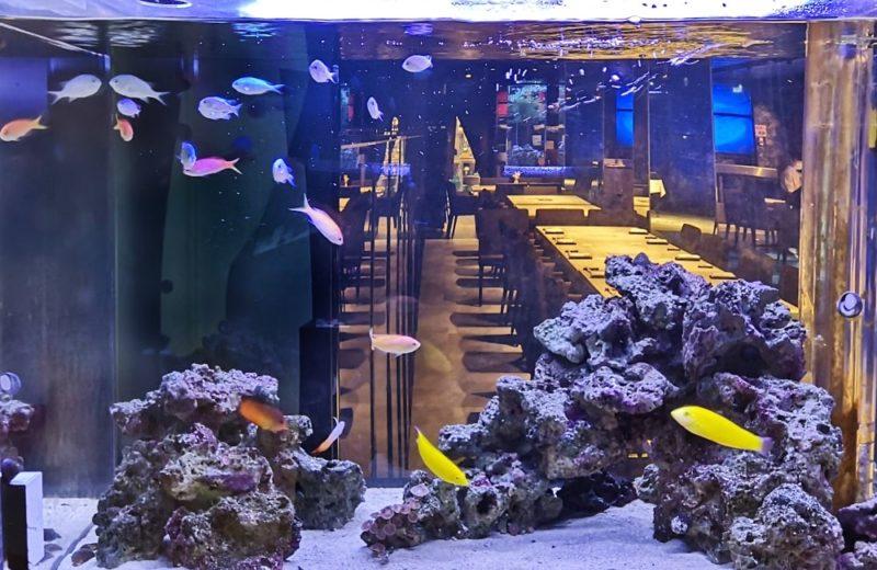 日本料理「魚月」様 海水魚水槽リース事例 その後 水槽画像1