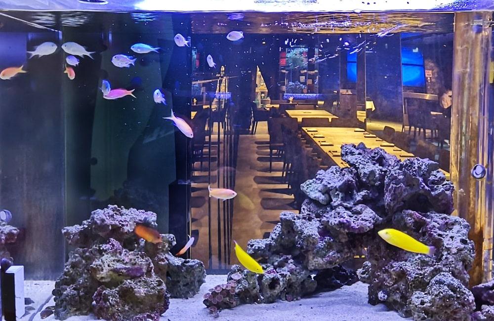 日本料理「魚月」様 海水魚水槽リース事例 その後 メイン画像