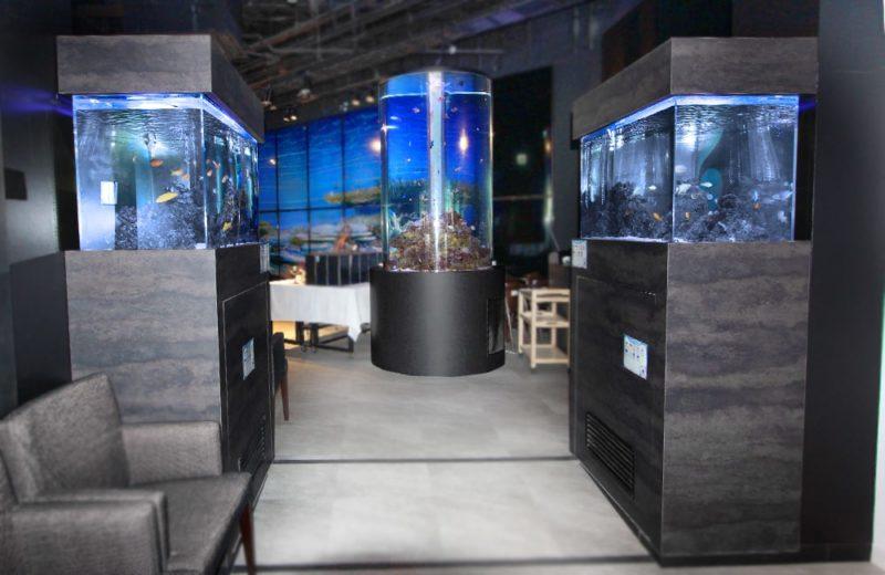 日本料理「魚月」様 海水魚水槽リース事例 その後 水槽画像3