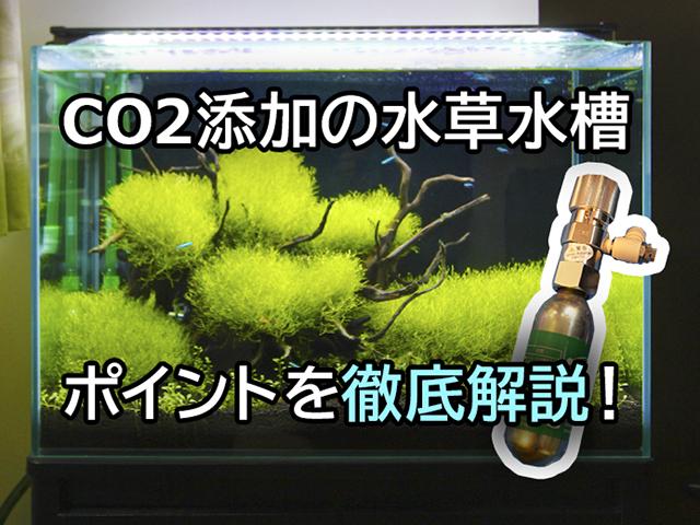 CO2添加水草水槽の仕組みと運用ポイント!機材や設置方法など徹底解説 水槽画像