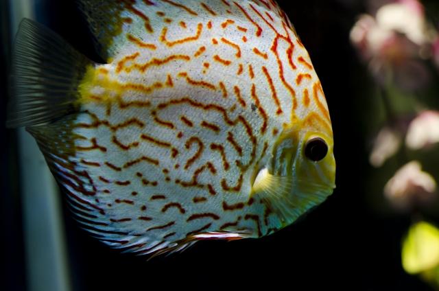 熱帯魚の病気を症状別に解説!魚の泳ぎ方・体表の変化と治療・対処法のサムネイル画像