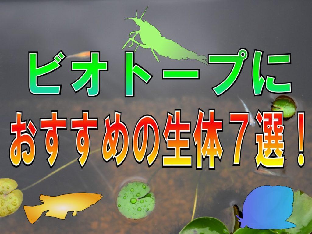 ビオトープにおすすめの生体7選!飼いやすい魚・エビ・貝をまとめました 水槽画像