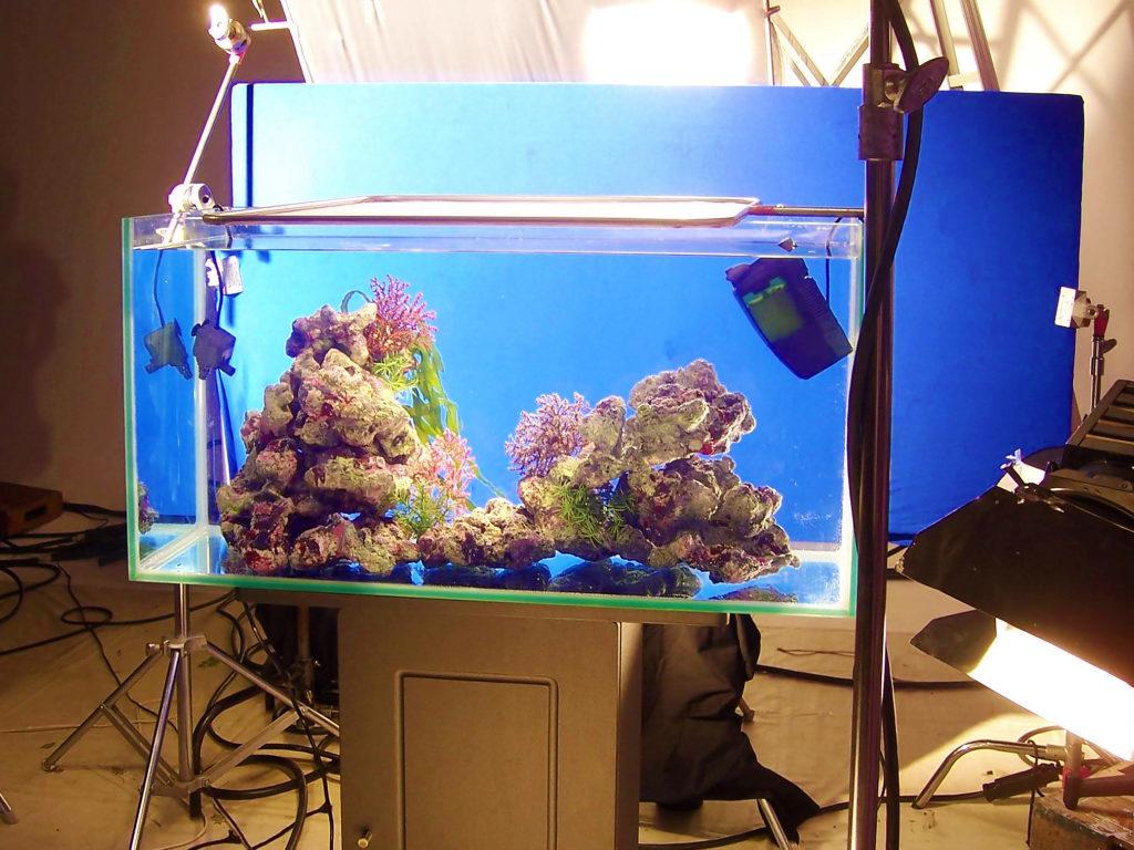 撮影で水槽を使う!メディアの短期水槽レンタル事例19選とご利用ポイントのサムネイル画像