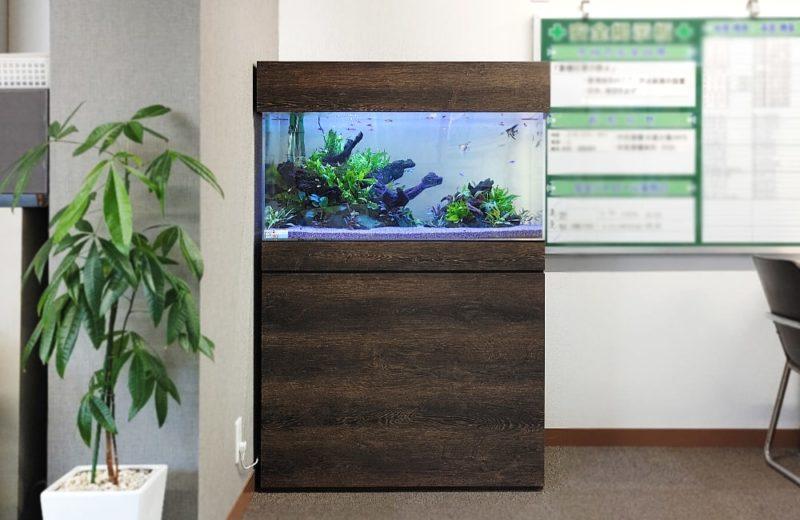 愛知県名古屋市 オフィス 90cm淡水魚水槽 レンタル事例 水槽画像1