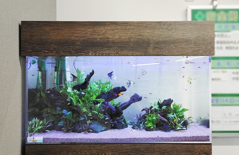 愛知県名古屋市 オフィス 90cm淡水魚水槽 レンタル事例 水槽画像2