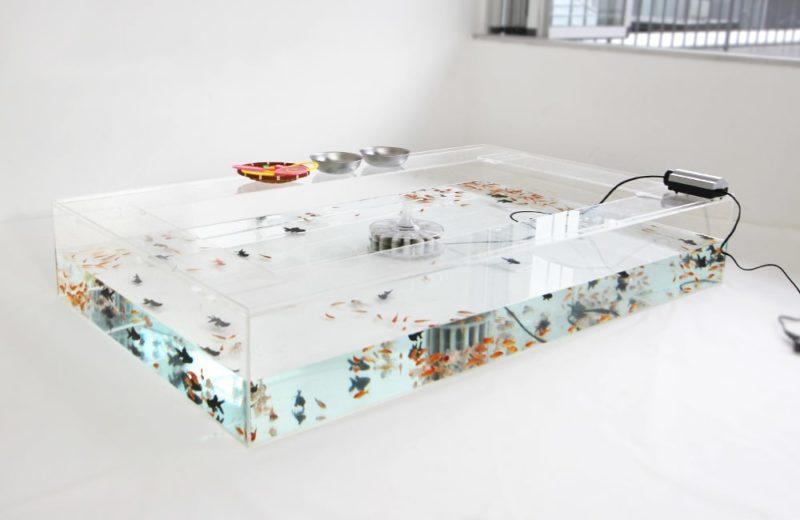 雑誌撮影用にレンタル 150cm 金魚水槽 短期レンタル事例 水槽画像1
