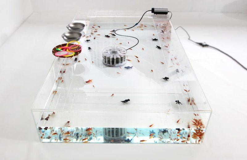 雑誌撮影用にレンタル 150cm 金魚水槽 短期レンタル事例 水槽画像5