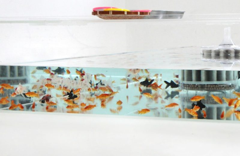 雑誌撮影用にレンタル 150cm 金魚水槽 短期レンタル事例 水槽画像3