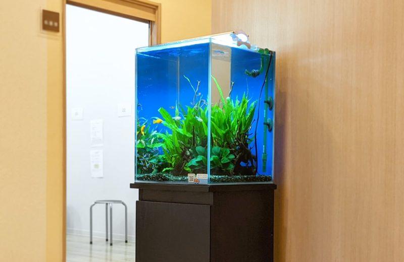 神奈川県 クリニック 30cm淡水魚水槽 水槽レンタル お試しキャンペーン事例 水槽画像2