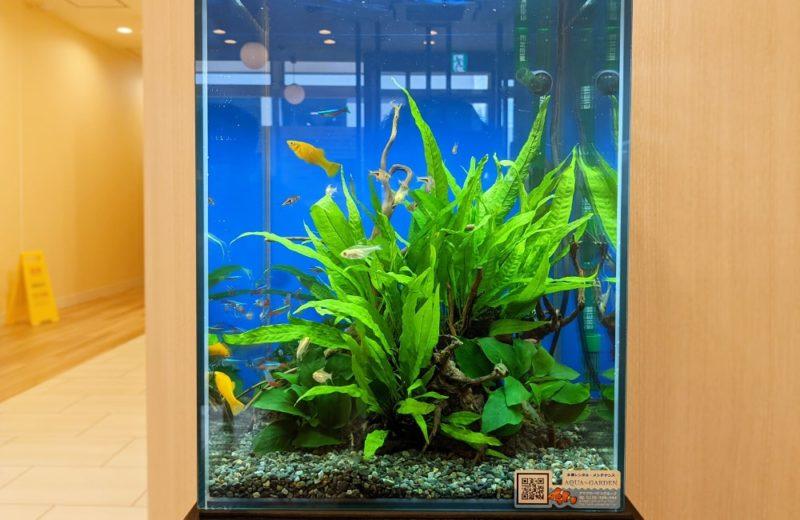 神奈川県 クリニック 30cm淡水魚水槽 水槽レンタル お試しキャンペーン事例 水槽画像4