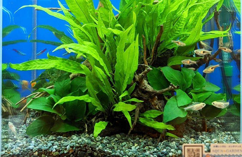 神奈川県 クリニック 30cm淡水魚水槽 水槽レンタル お試しキャンペーン事例 水槽画像5