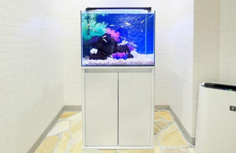 法律事務所様 60cm 淡水魚水槽レンタル事例 水槽画像1