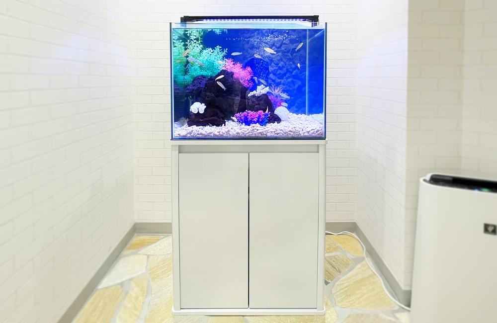法律事務所様 60cm 淡水魚水槽レンタル事例 メイン画像
