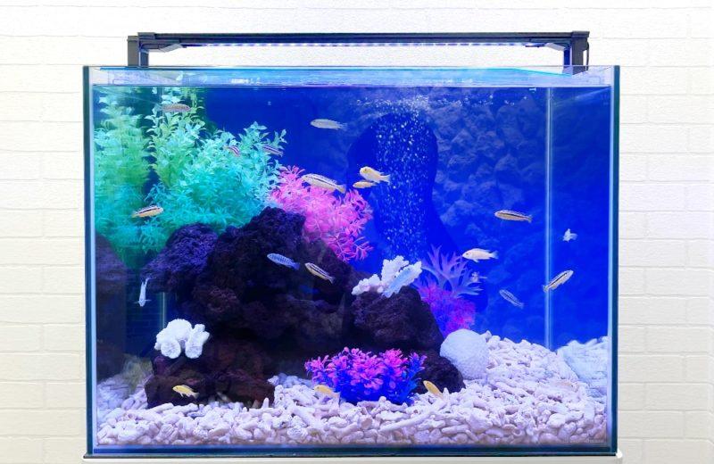 法律事務所様 60cm 淡水魚水槽レンタル事例 水槽画像2