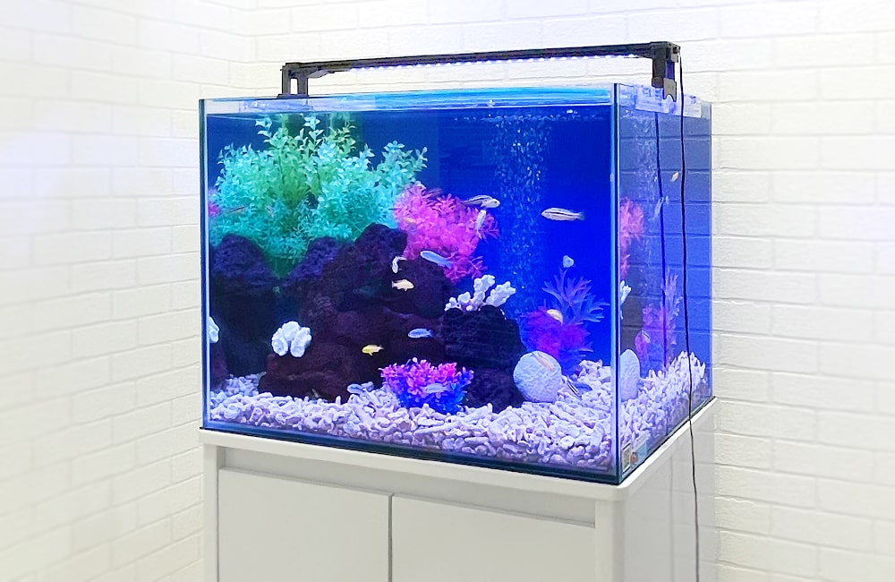 60cm淡水魚水槽 斜めから