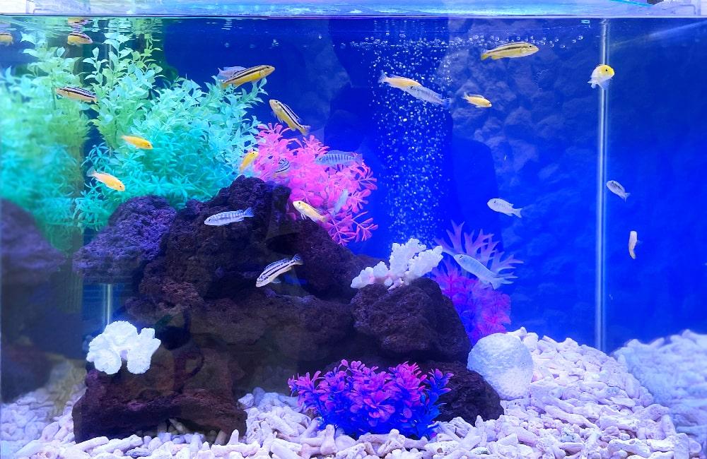 60cm淡水魚水槽 水槽の中