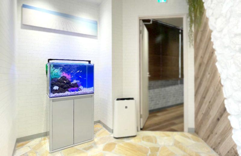 法律事務所様 60cm 淡水魚水槽レンタル事例 水槽画像4