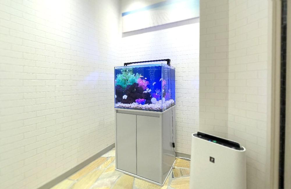 60cm淡水魚水槽 全体