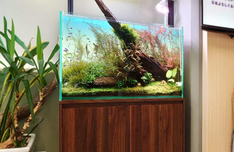 千代田区 企業オフィス 90cm淡水魚水槽 メンテナンス事例 水槽画像1