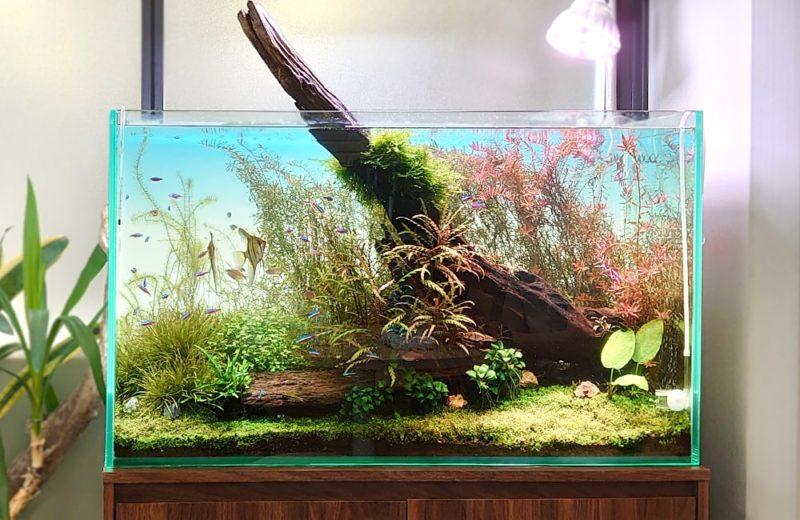 千代田区 企業オフィス 90cm淡水魚水槽 メンテナンス事例 水槽画像2