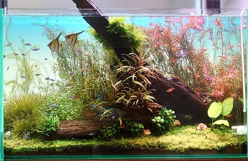 千代田区 企業オフィス 90cm淡水魚水槽 メンテナンス事例 水槽画像3