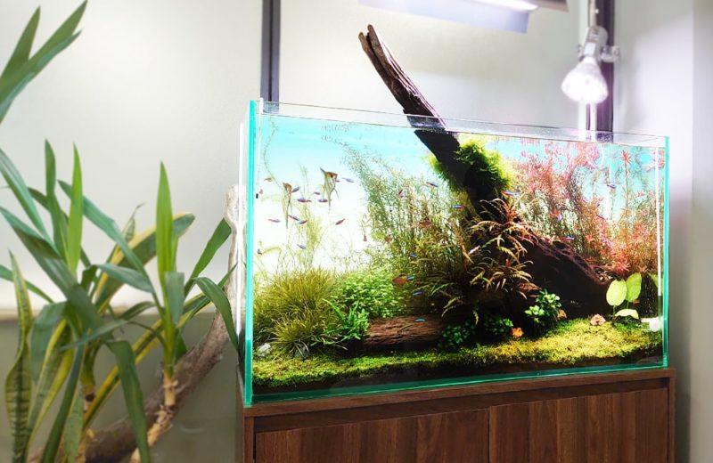 千代田区 企業オフィス 90cm淡水魚水槽 メンテナンス事例 水槽画像4