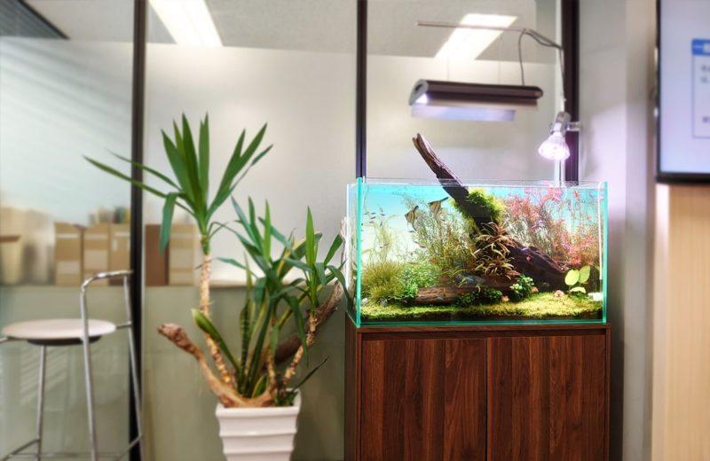 千代田区 企業オフィス 90cm淡水魚水槽 メンテナンス事例 水槽画像5