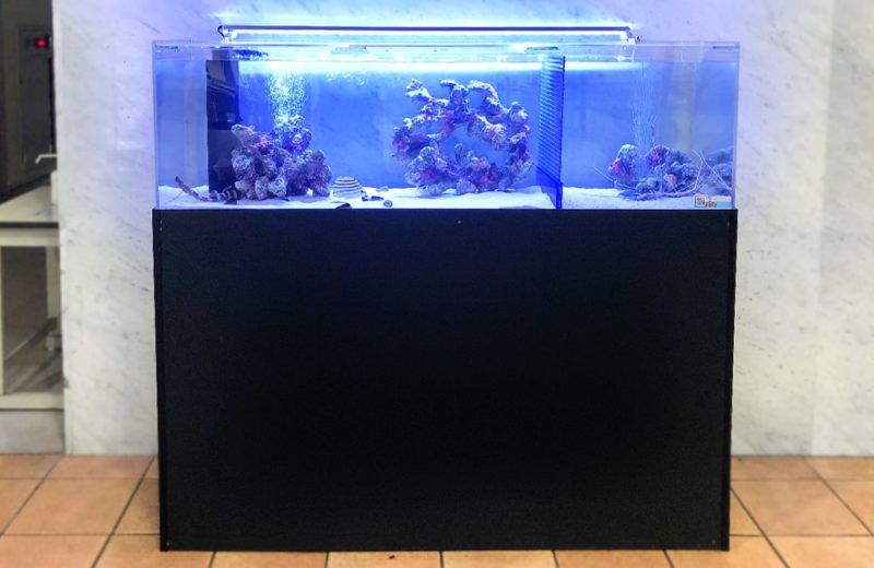 愛知県 人間環境大学様 150cm海水魚水槽 レンタル事例 水槽画像1